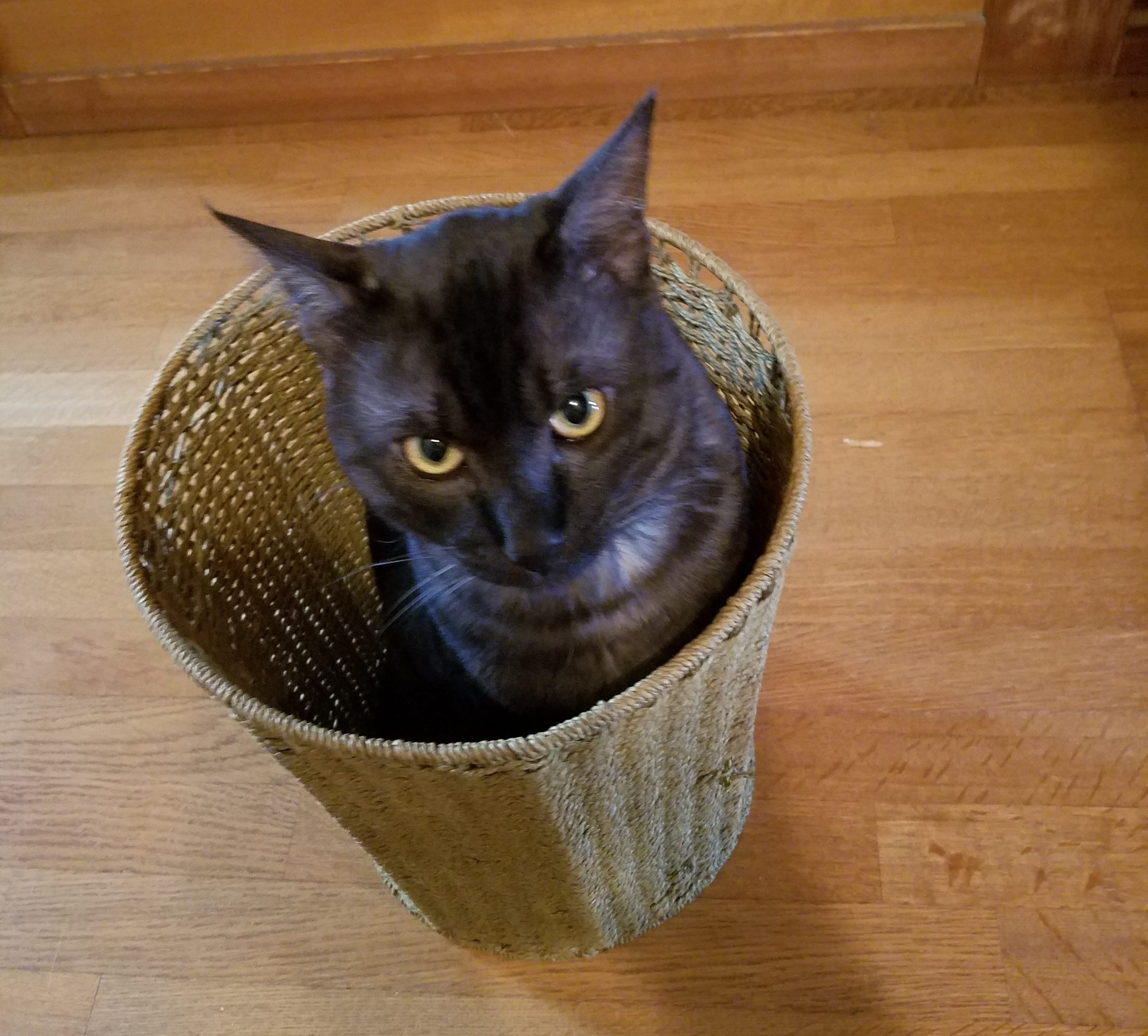 黒猫マロのかくれんぼ-now